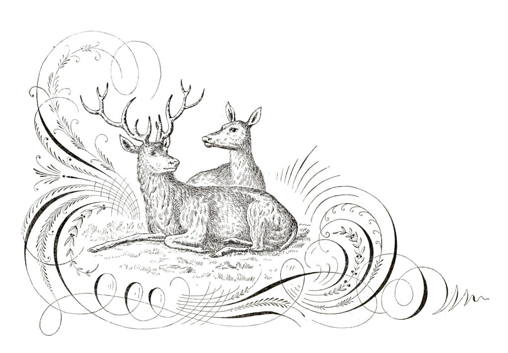 deer pen flourish illustration