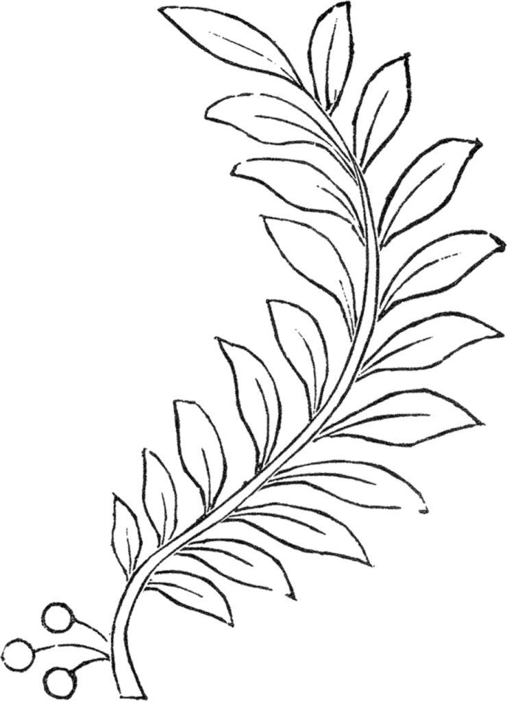 laurel leaf branch image