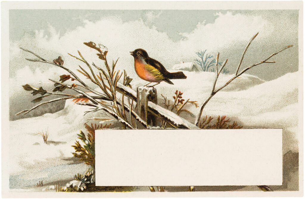 vintage winter bird label image