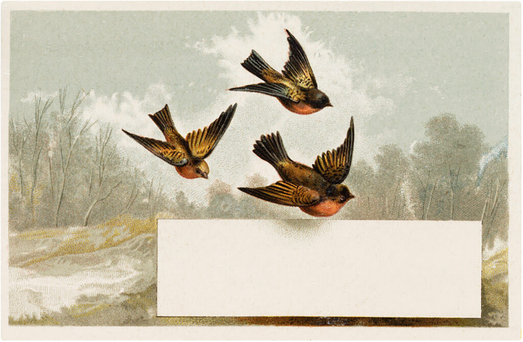 vintage winter birds flying image
