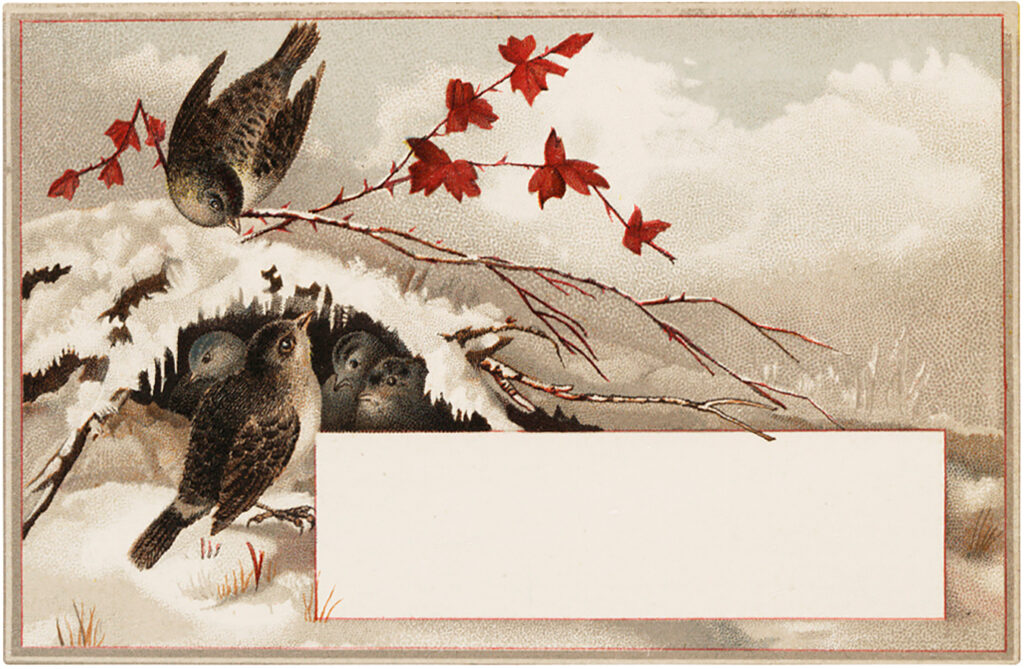 winter birds leaves snow label clipart