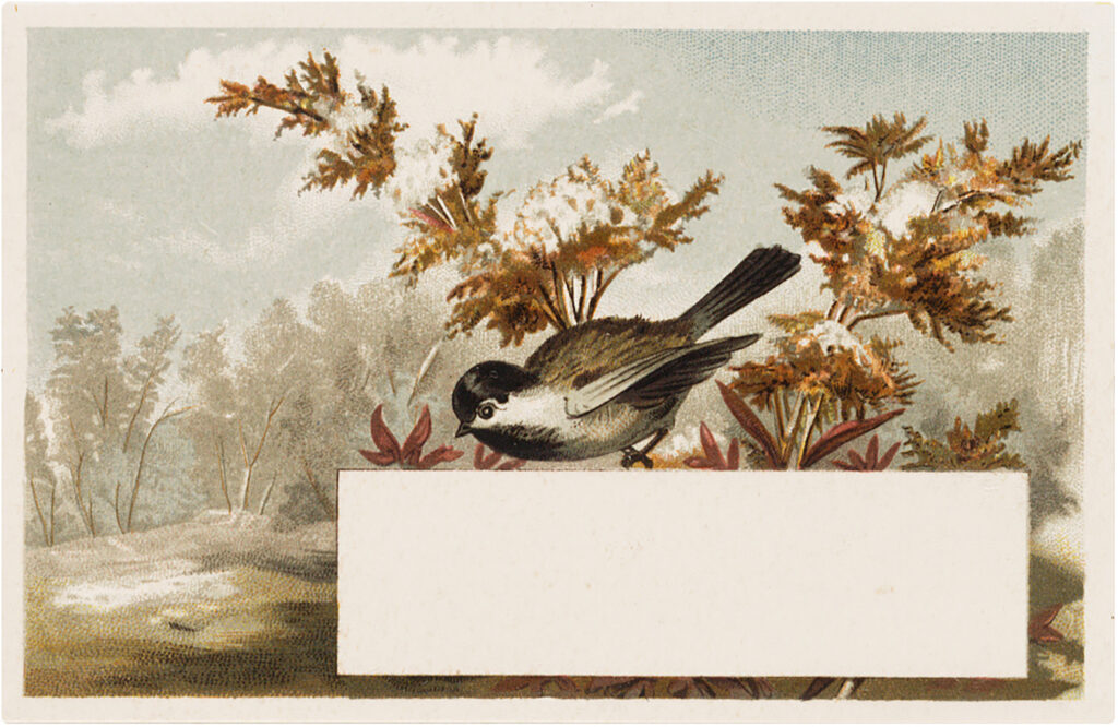 bird chickadee fall label illustration