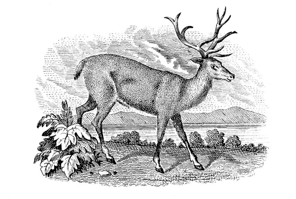 deer landscape engraving clipart