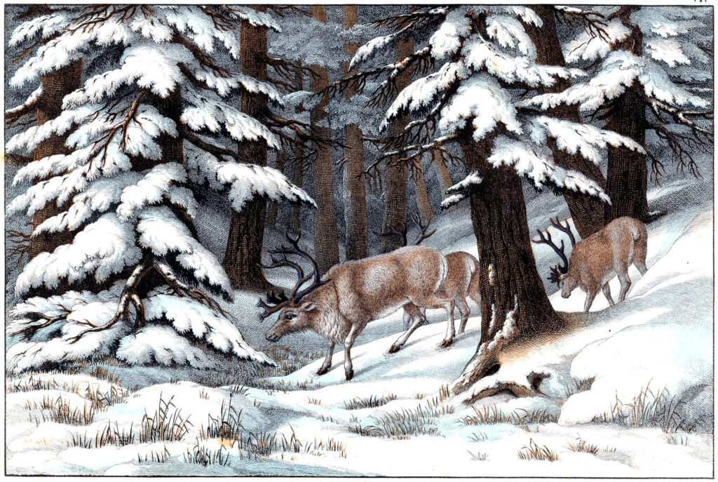 reindeer snow forest vintage illustration
