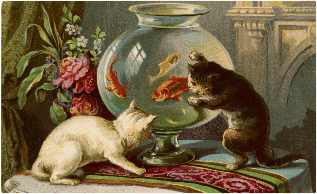 curious cats goldfish bowl image