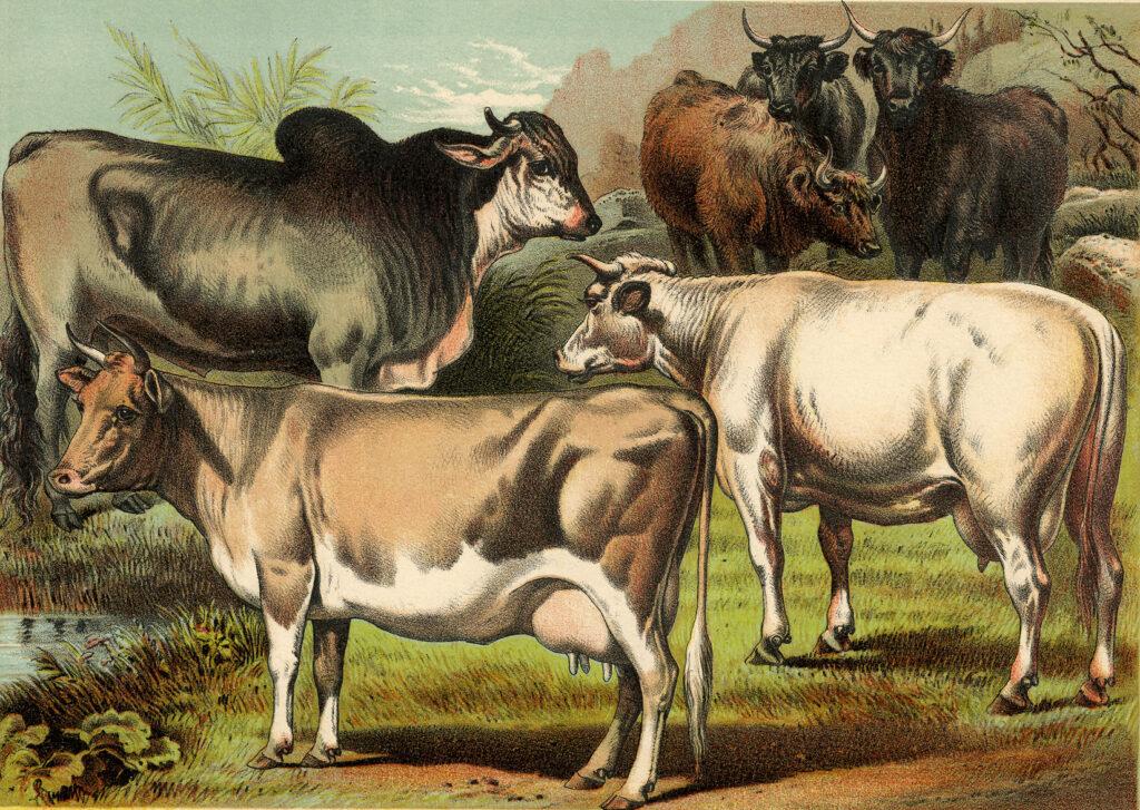 farmhouse cows illustration