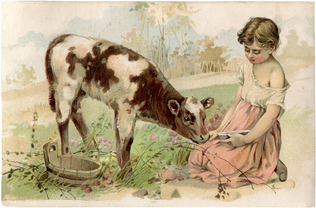 girl feeding calf vintage illustration