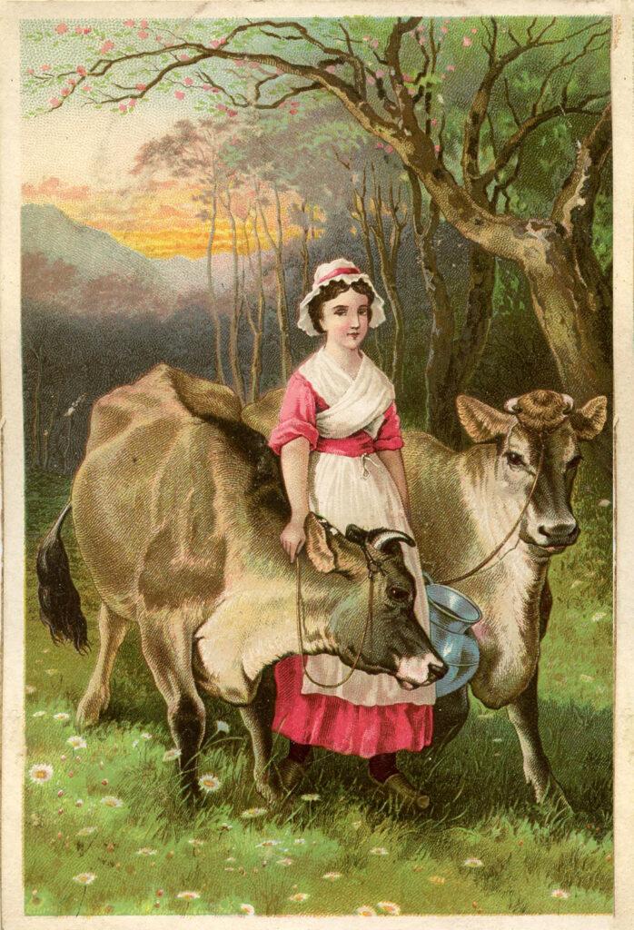 milkmaid cows image