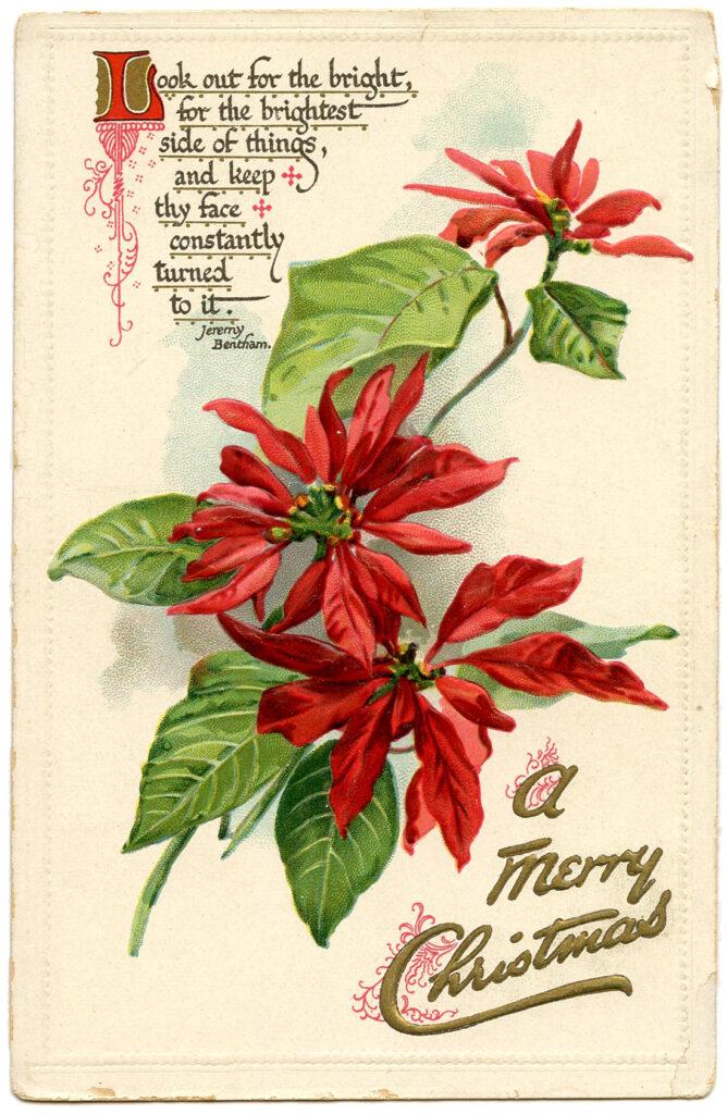 Merry Christmas Poinsettia Image