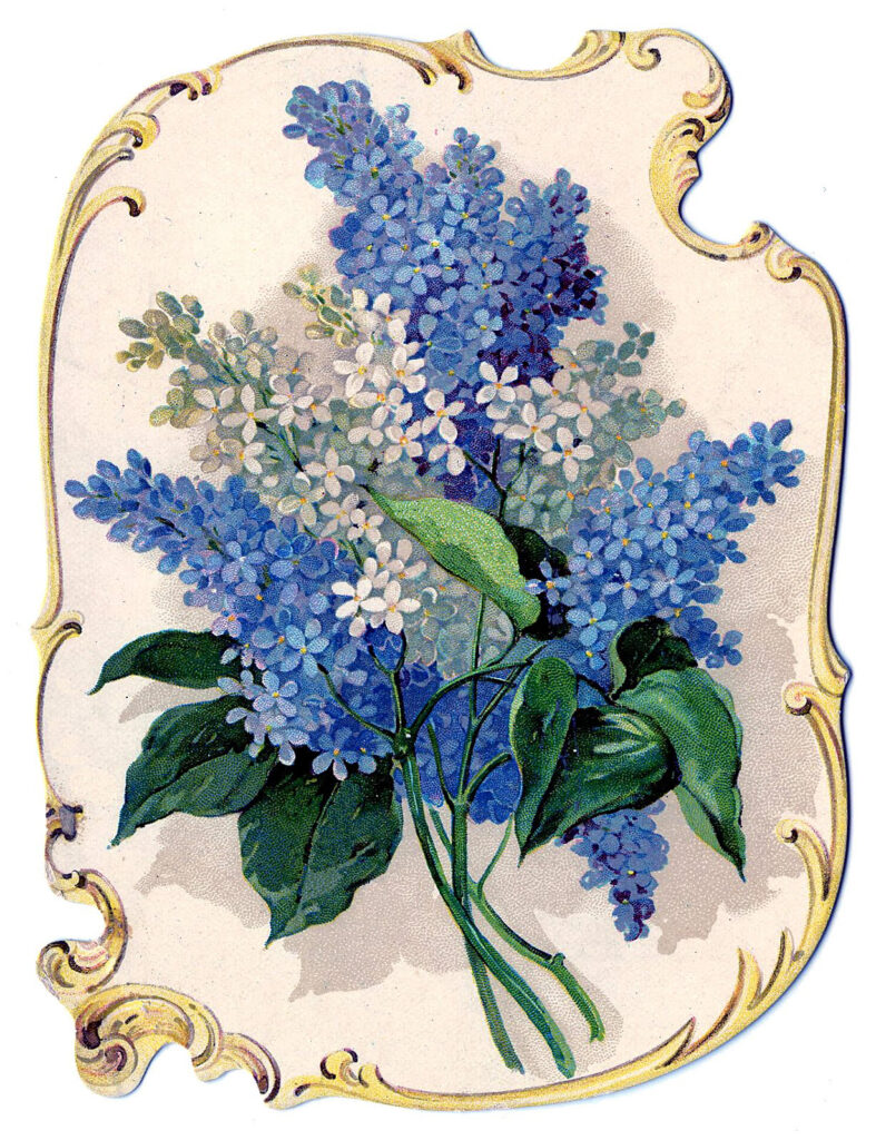 lilac flowers vintage frame image