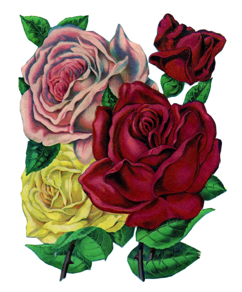 vintage roses clipart