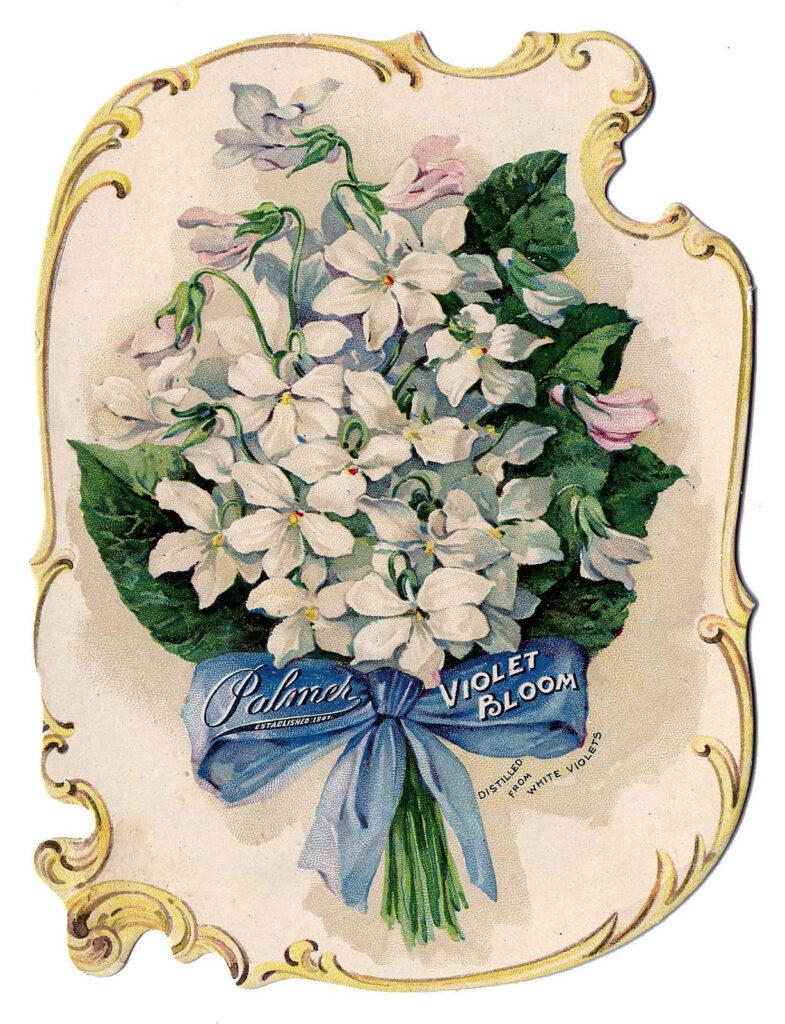 white violets vintage clipart