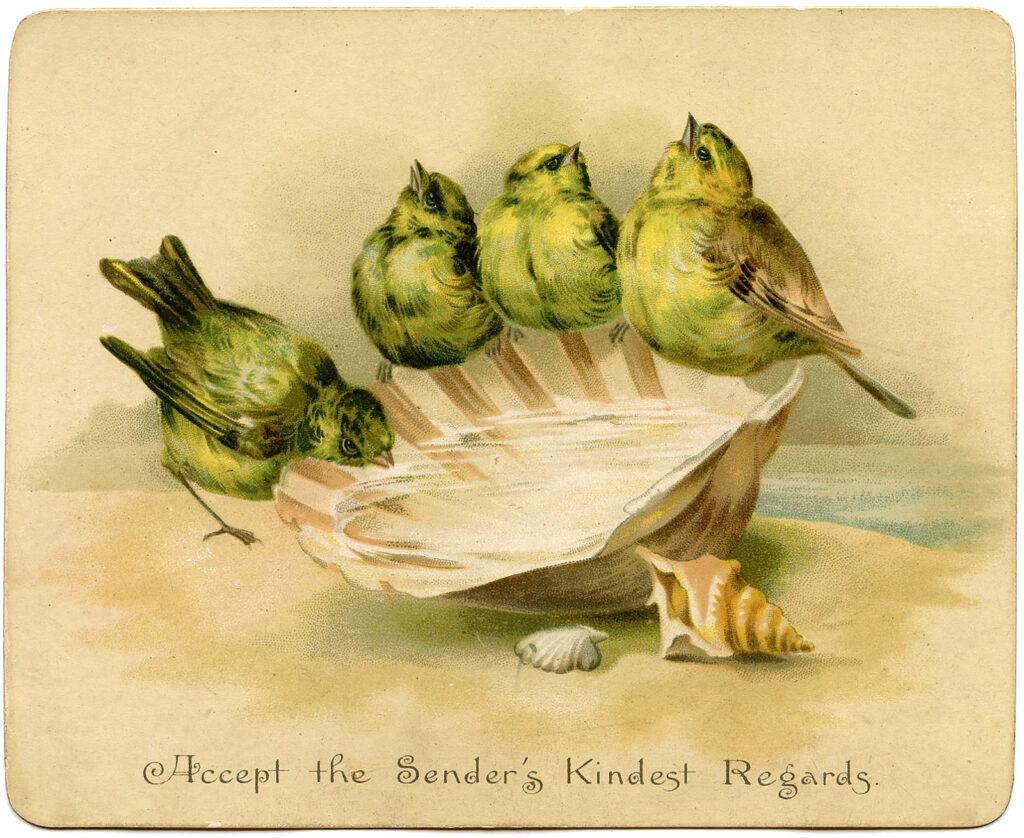 birds seashell vintage illustration