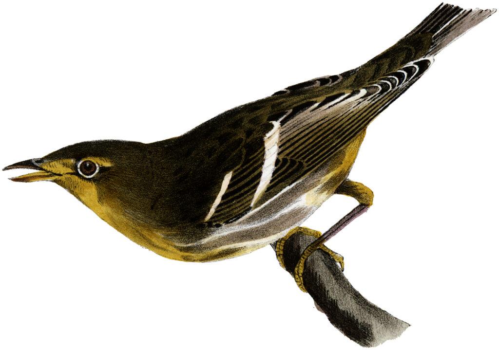 natural history bird twig image