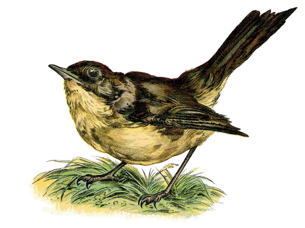yellow brown bird grass clipart