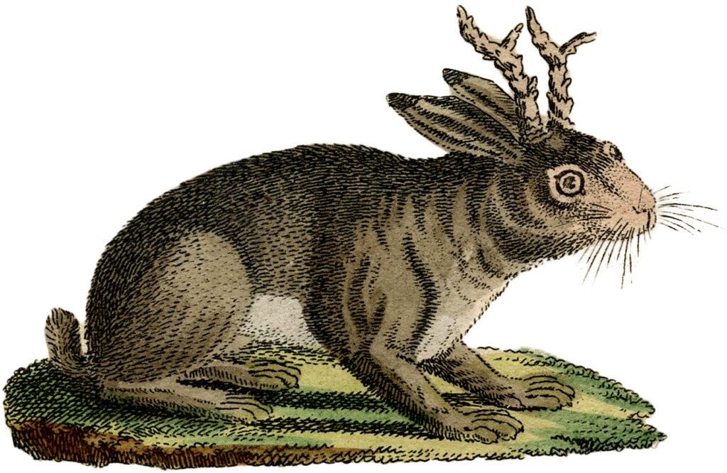 vintage rabbit horns jackalope image