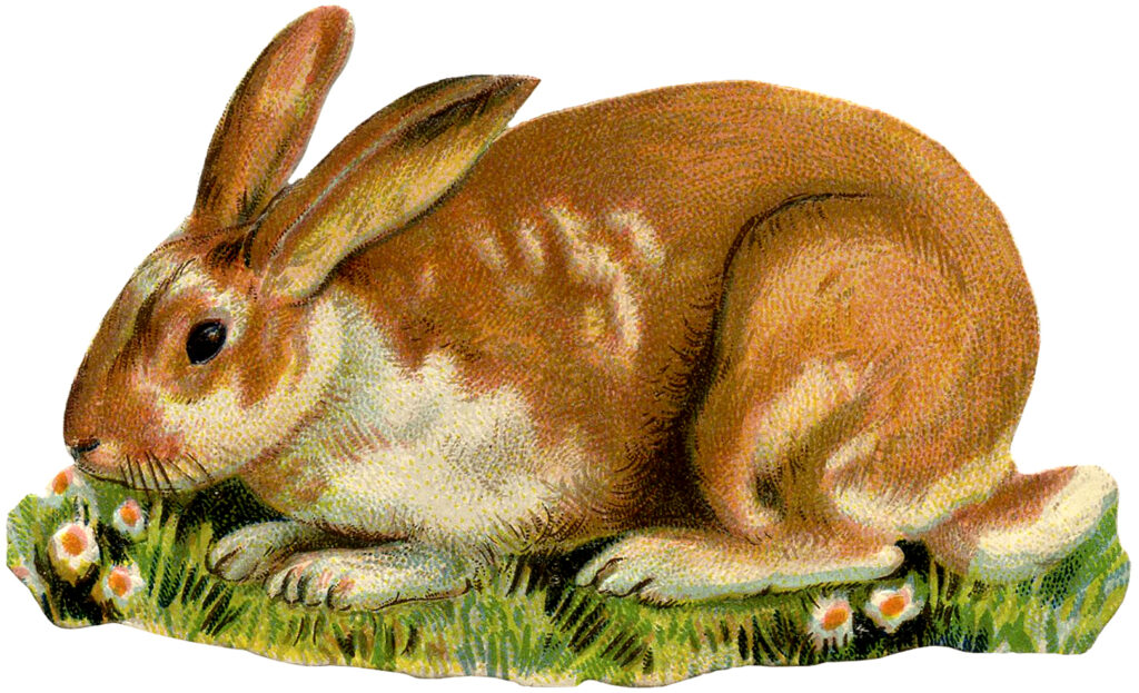 vintage spotted rabbit illustration