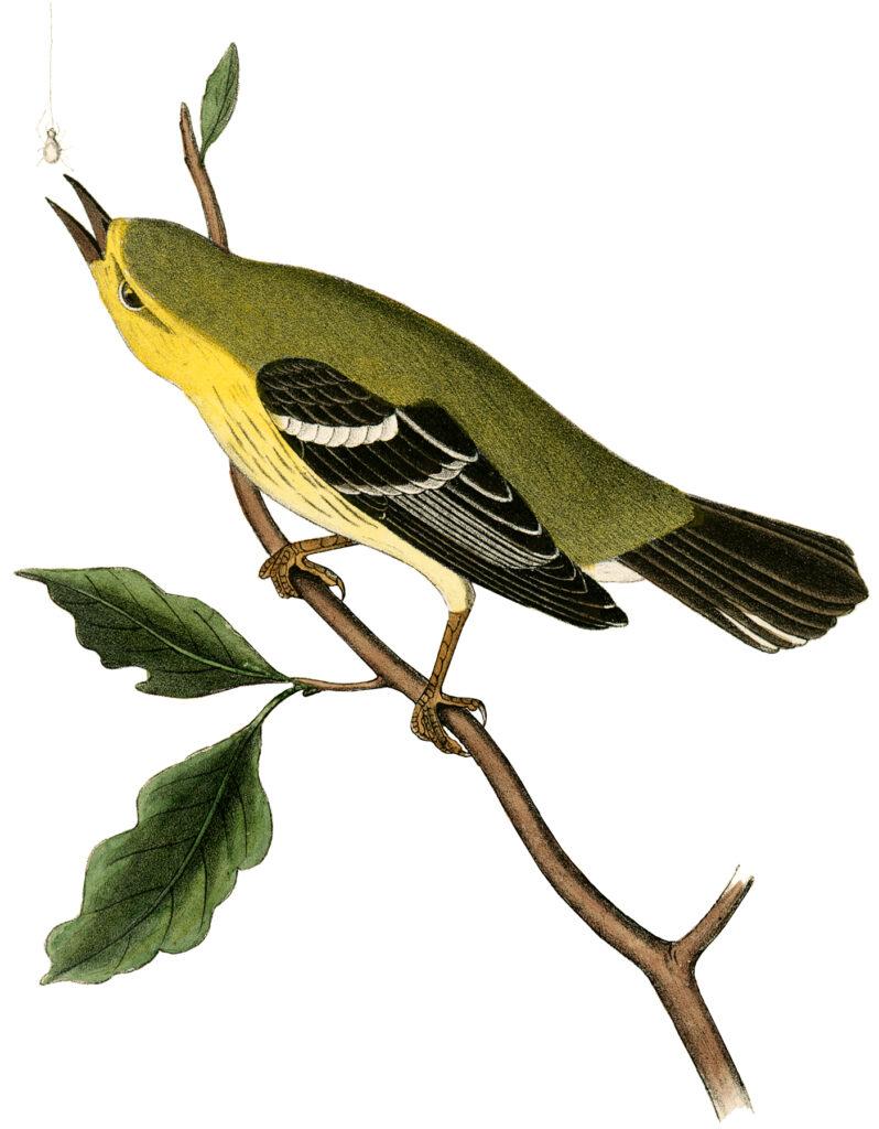 yellow bird twig illustration