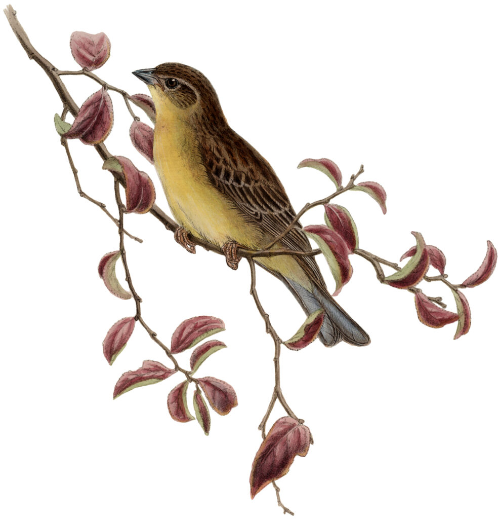yellow bird branch image