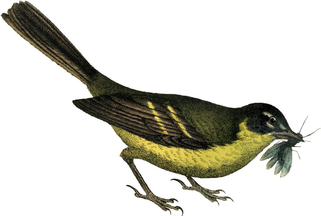 yellow bird insect illustration