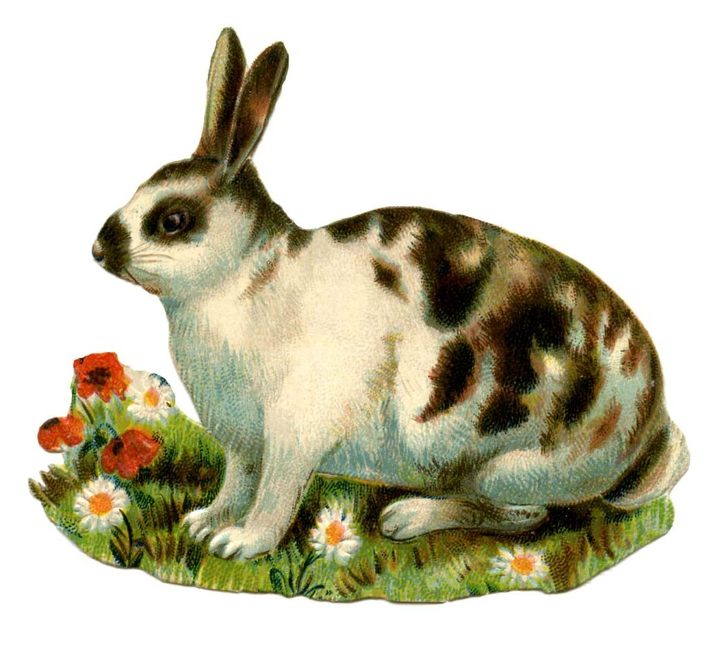spotted bunny vintage illustration