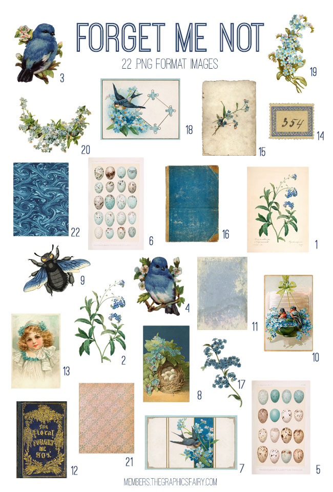 vintage forget me not ephemera digital image bundle