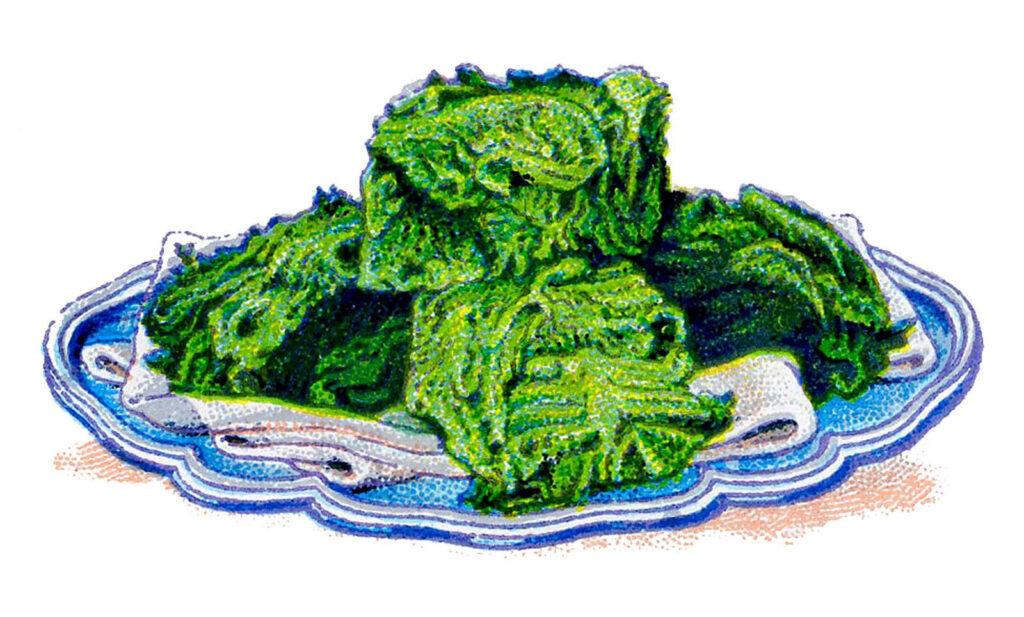 serving platter cabbage clipart