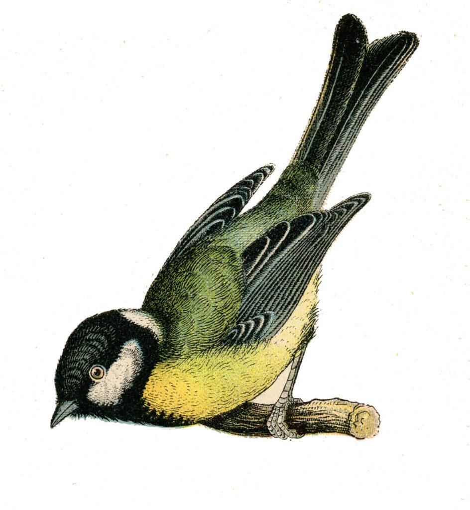 yellow bird twig image