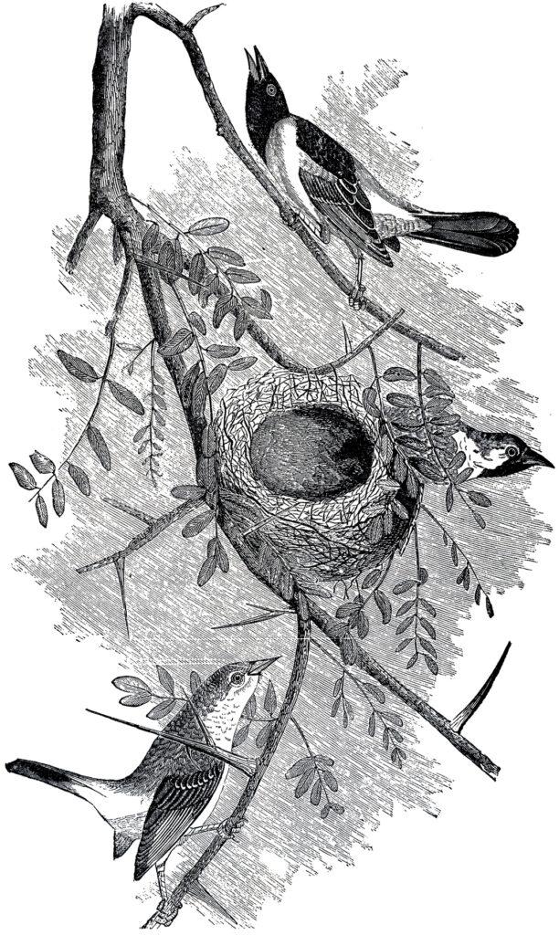 bird nest engraving image