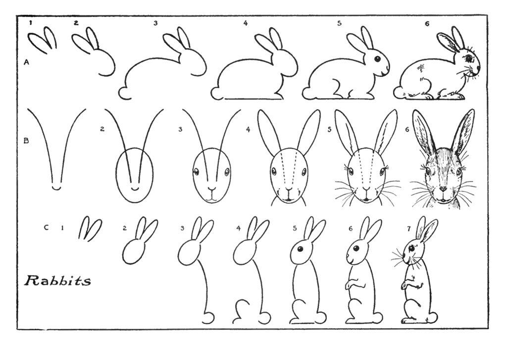 Bunny Drawing Lesson illustration