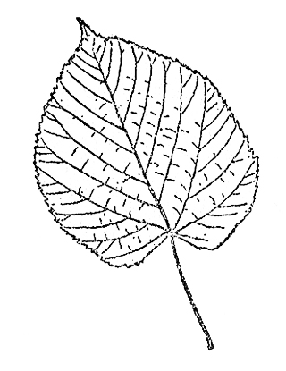 field journal leaf illustration
