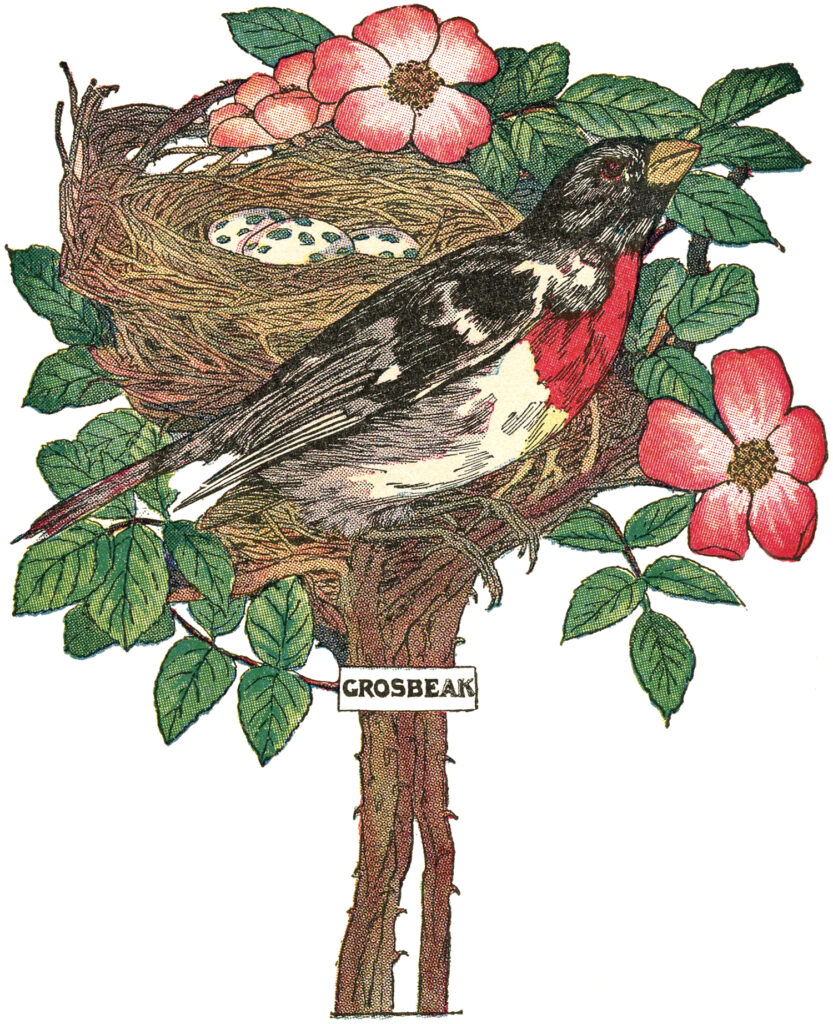 bird nest eggs flower