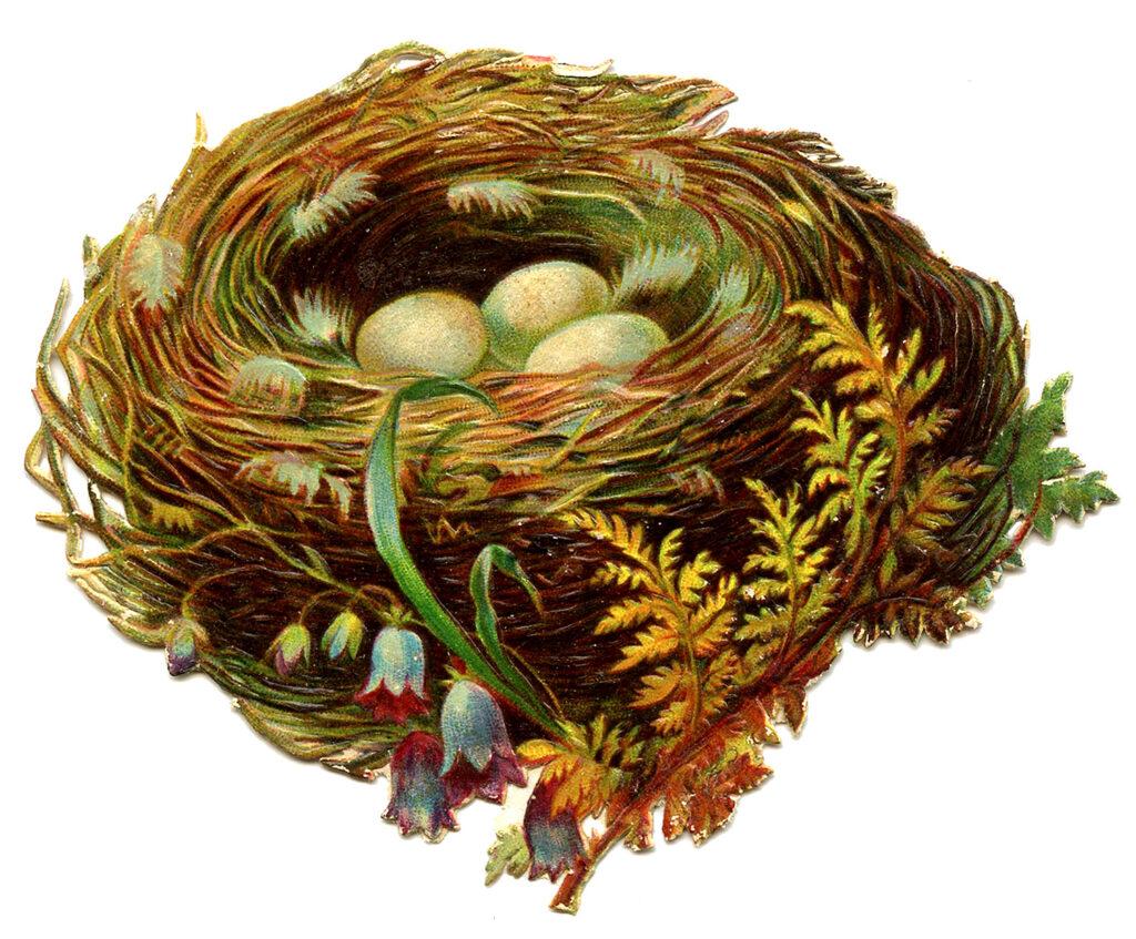 nest eggs fern bluebells clipart