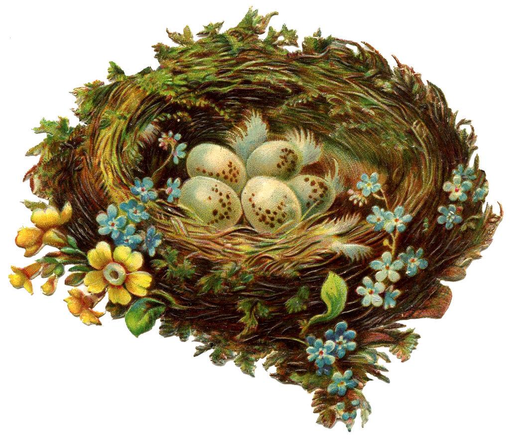 spring nest eggs flowers illustration