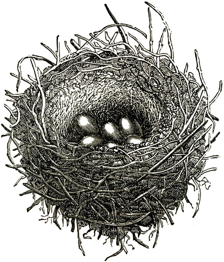 black white nest eggs clipart
