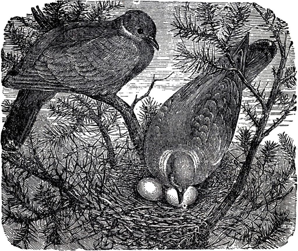 birds nest eggs image