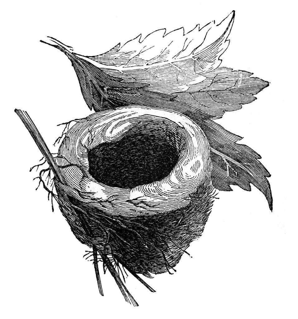 black white nest image