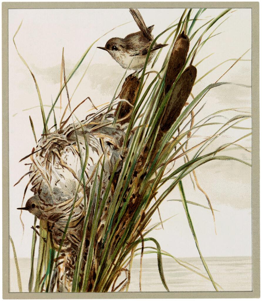 birds marsh grass nest image