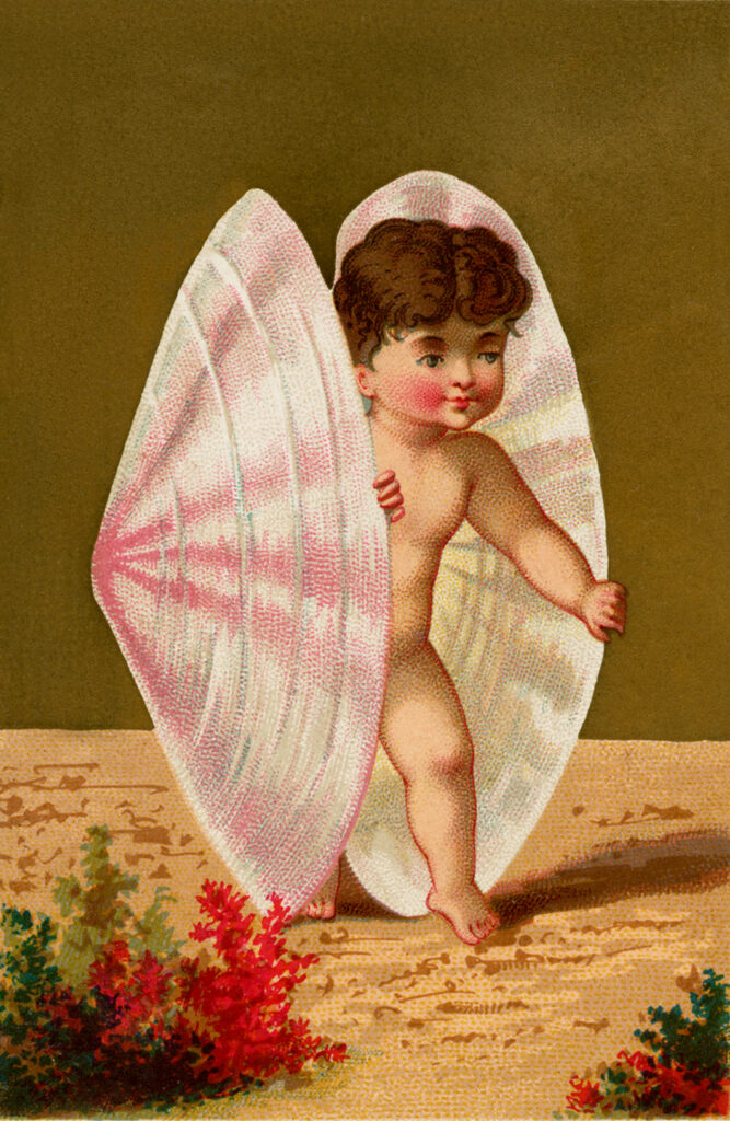 baby seashell vintage illustration