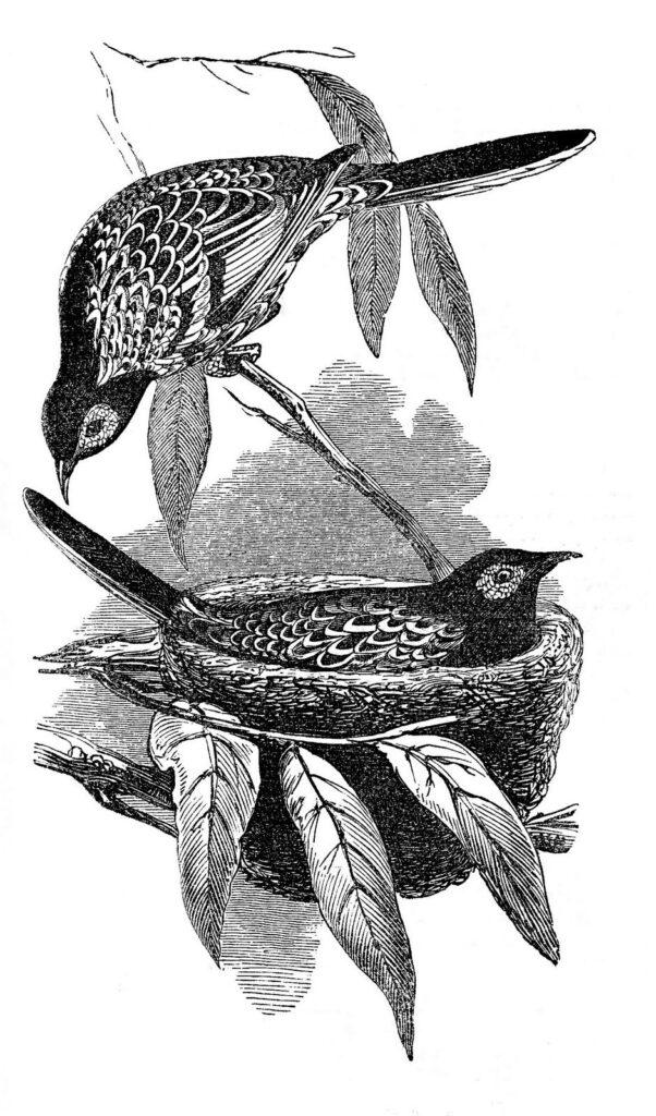 bird pair nest illustration