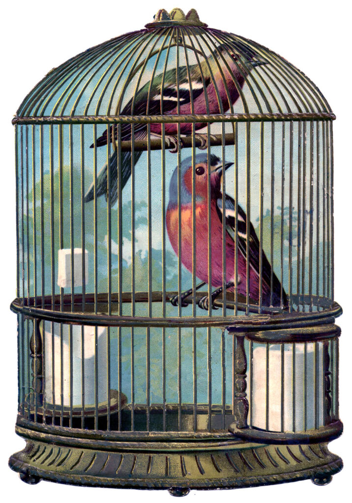 pink birds birdcage image