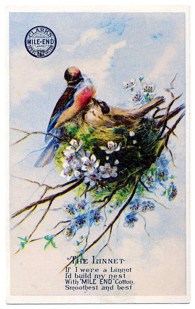 birds nest blossoms illustration