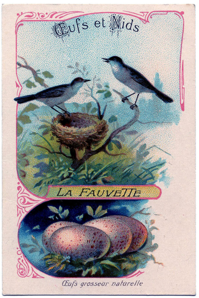 French typography birds nest image