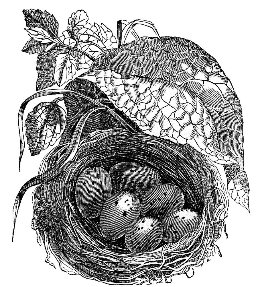 nest eggs leaf image