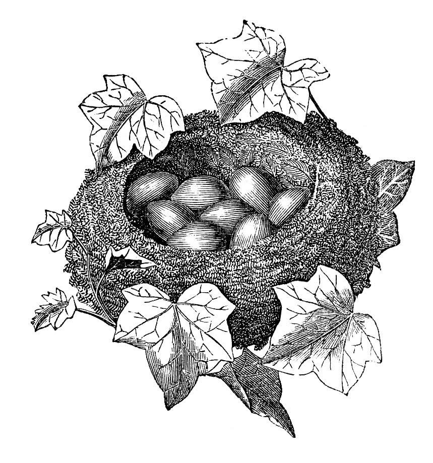 nest engraving leaves eggs image