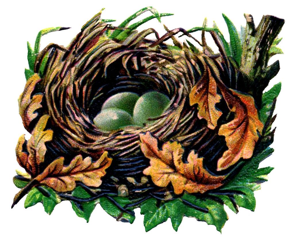 Fall leaves birds nest eggs image