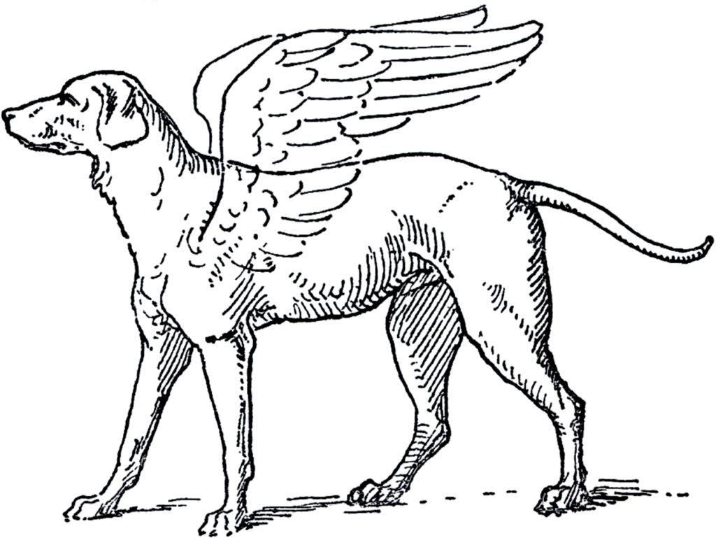 winged dog angel illustration