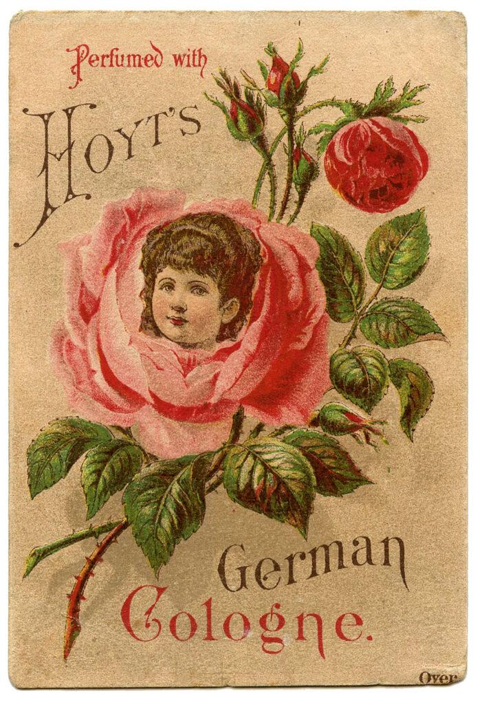 hoyt's girl in rose cologne label illustration