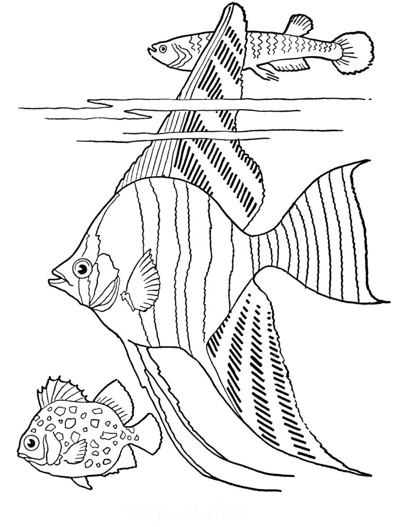 tropical fish coloring page image