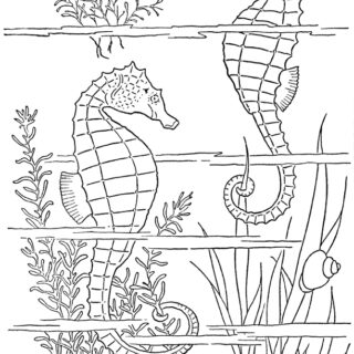 sea horse coloring page illustration